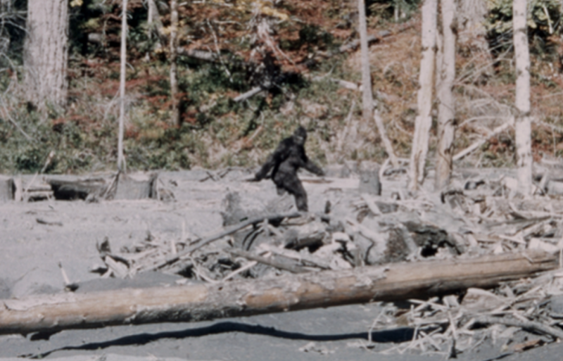 Amateur footage allegadly showing Bigfoot in 1967.