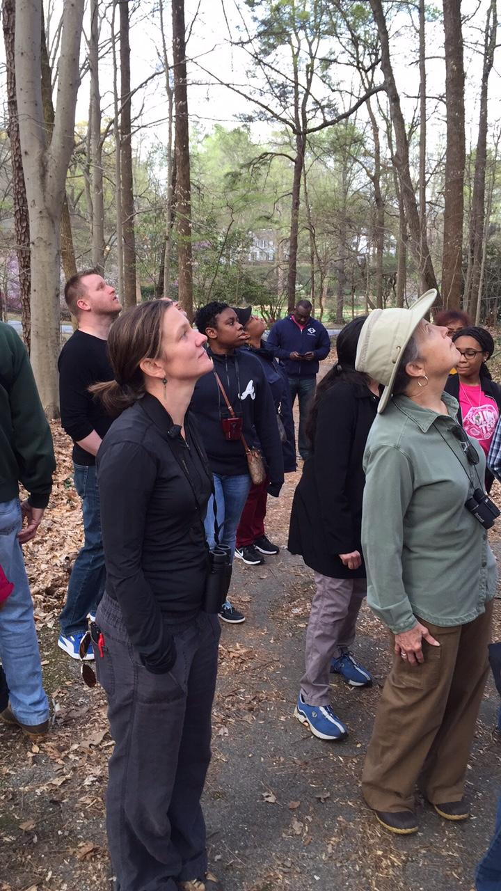 A group is the lookout for singing birds at the Fernbank Forest in Atlanta  on March 19,  2016.