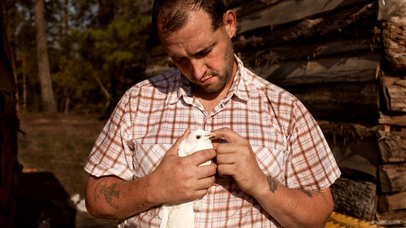 U.S. Army veteran Alex Sutton cradles a rock dove show pigeon, one of many heritage poultry breeds being raised on his 43 acre farm in Moore County, North Carolina. He is featued in the documentary, Farmer/Veteran.