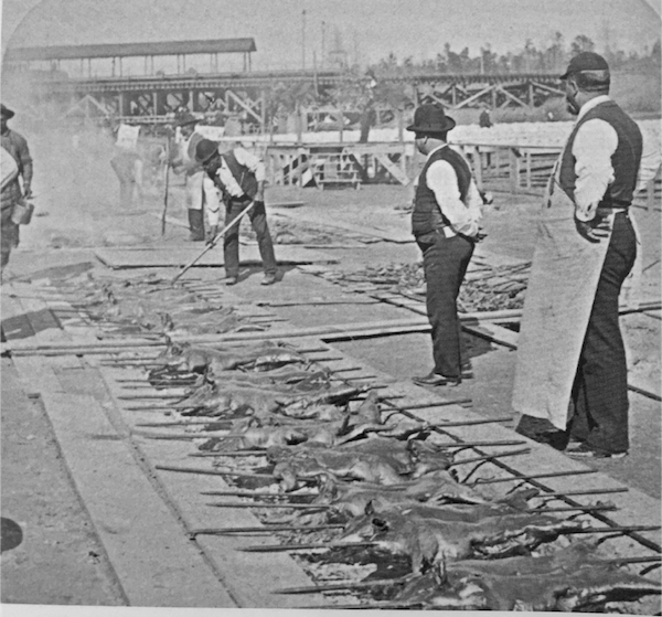 Men check the barbecue pits at the 1895 Cotton States and International Exposition in Atlanta, Georgia.