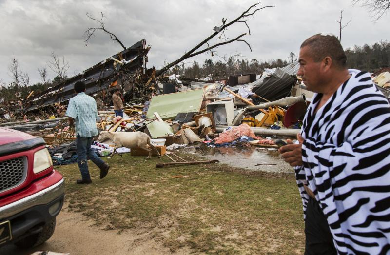A man watches friends round up his son's sheep in the rubble of the trailer home he, his son and his daughter in law shared where a tornado hit Adel, Ga. on January 21.