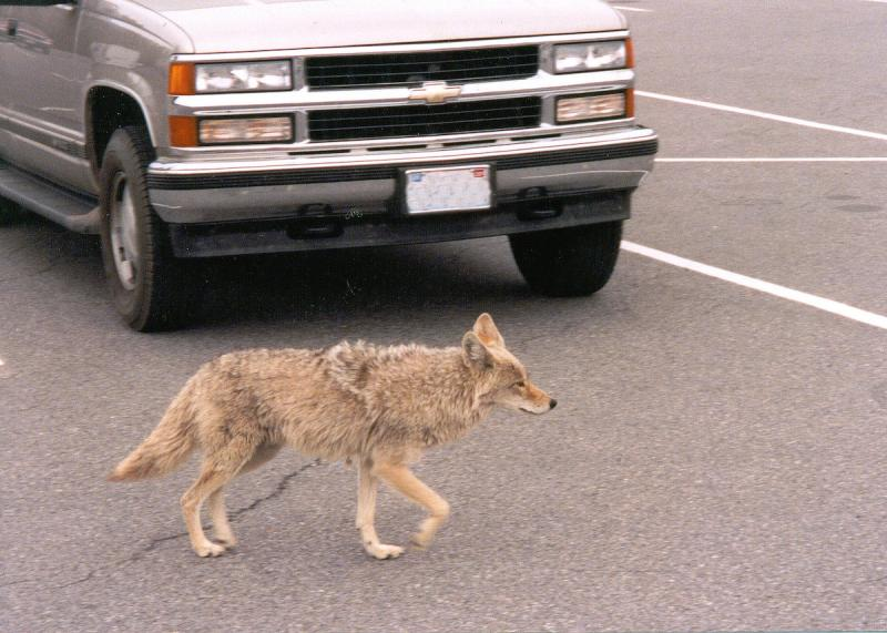 Georgia is promoting a plan to stage a coyote-killing contest in metro Atlanta.