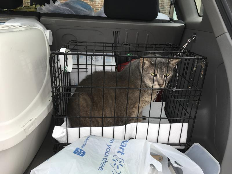 A 17 year old cat belonging to Chelsea McKinley's family loaded and ready to return to Homestead, Florida