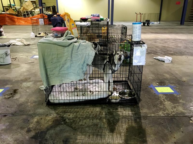 Sophia Ussery's Husky in a crate at the Macon pet evacuation center