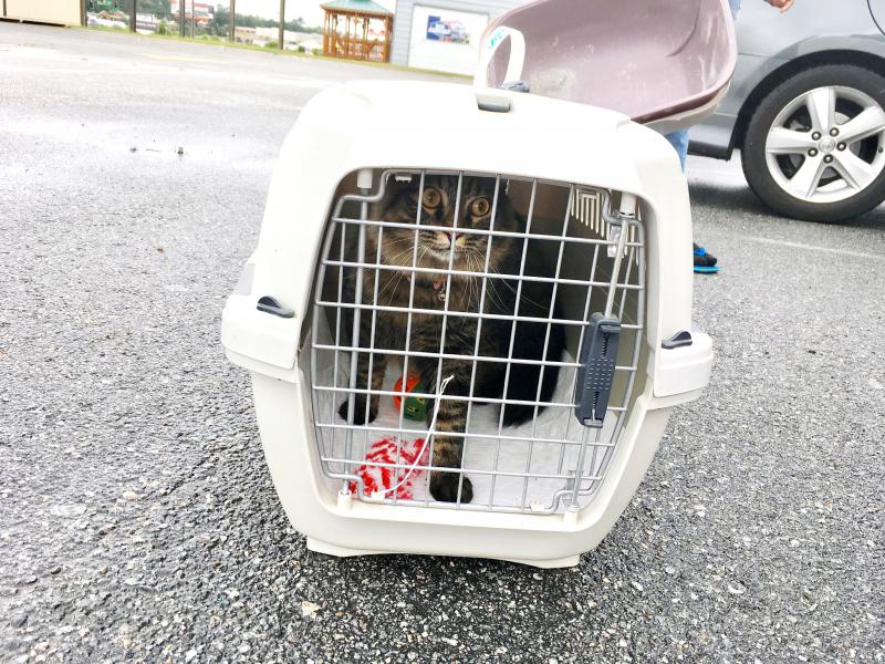 Kitty getting ready to return to Florida after staying at Macon's pet evacuation center