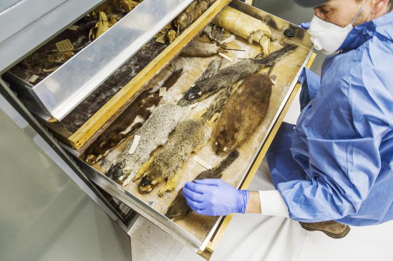 Craig Byron, a biologist at Mercer University in Macon, opens up a drawer of preserved mammal specimens he found while preparing to help the school's science department move to a new building.