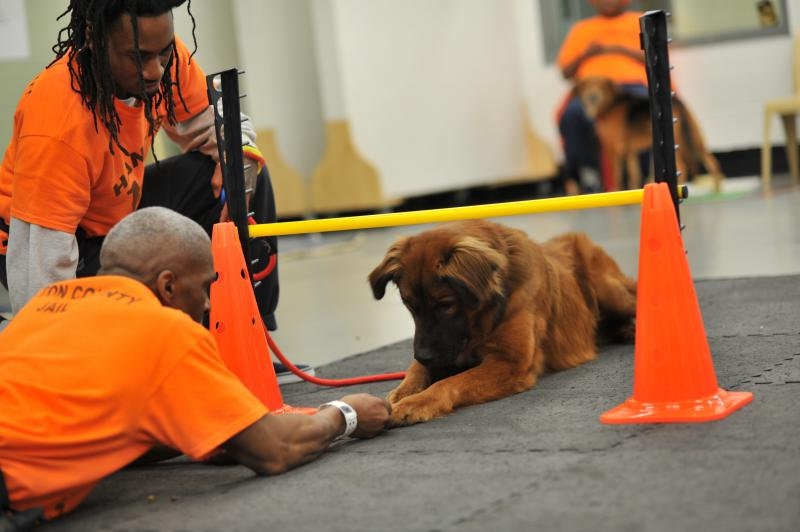 At the Fulton County Jail, inmates are paired with furry friends through the Canine Cellmates program. Inmates train the dogs and prepare them for adoption.