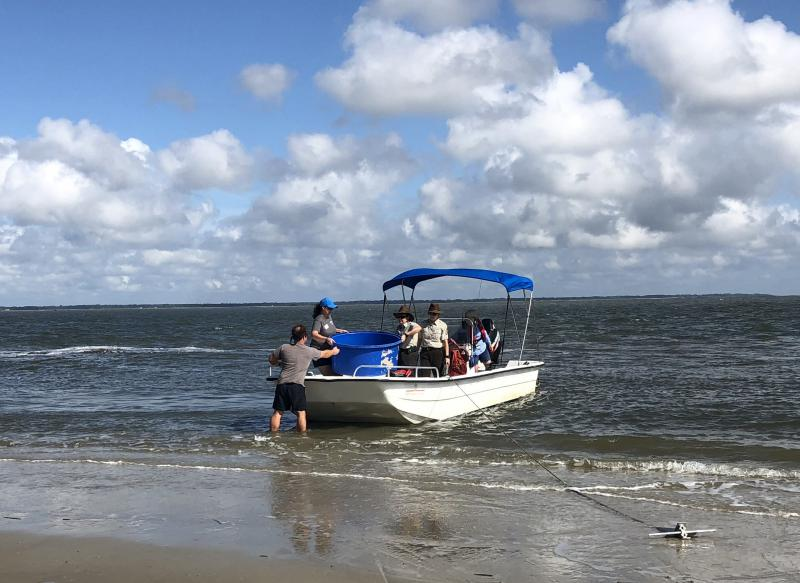 Devin Dumont and fellow aquarium curator Lisa Olenderski unload Lefty from the boat onto the beach at Wassaw Island, a barrier island off Georgia's coast.