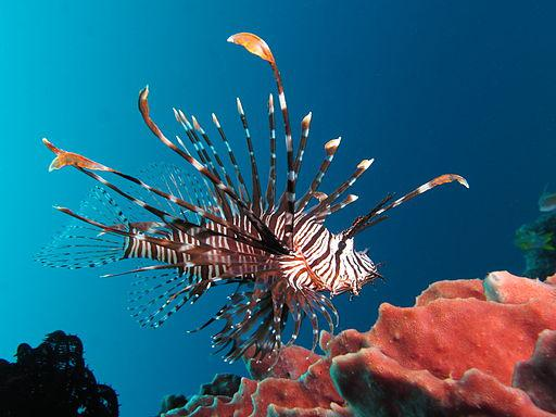 The exotic and invasive lionfish is on the menu at A Fishy Affair, benfitting the Gray's Reef National Marine Sanctuay Foundation