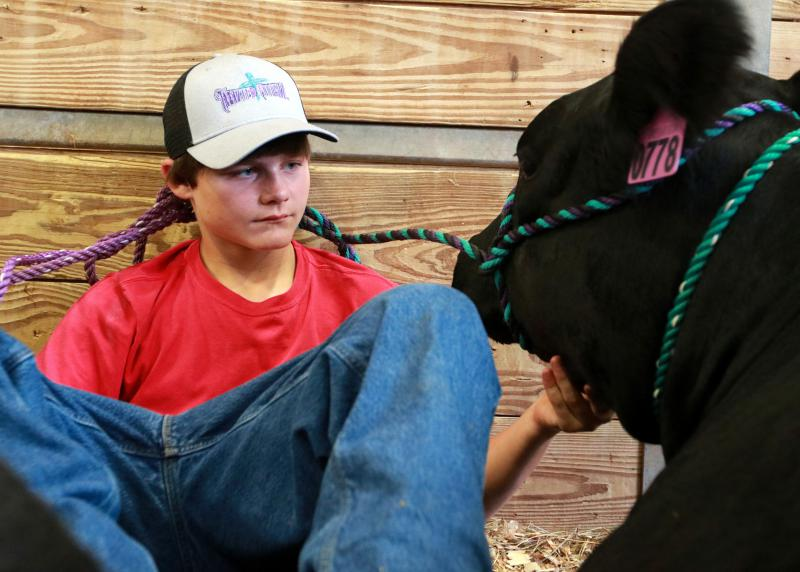 Jacob Standridge, a 15-year-old cowboy, enjoys time with his cow before the livestock competition at the Georgia National Fair, Perry, Georgia, on Saturday, Oct. 6, 2018. Standridge is from Clarkesville, Georgia.