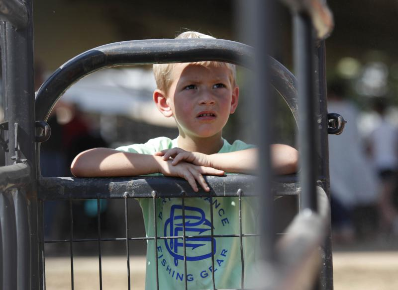 Zander Lloyd, 5, from Warner Robins, Georgia, looks at the sheep used for mutton busting during the Georgia National Fair in Perry, Georgia, on Saturday, Oct. 6, 2018. Lloyd will be participating in mutton busting during the fair.