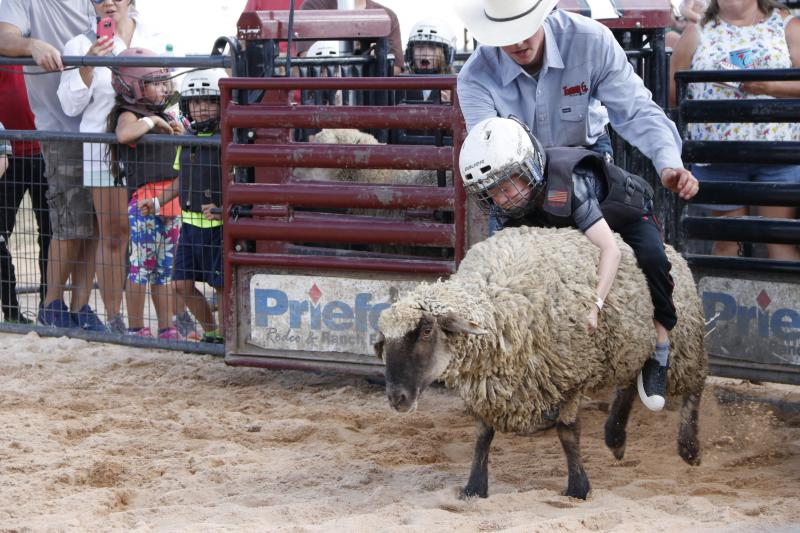 Zander Aycock of Hazlehurst hangs on tight to a sheep during the Muttin Bustin' competition on Saturday. This was Aycock's second year attempting the ride and he came in just short of the six second riding time that was required to get a score.