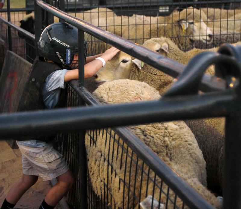 Grayer Holmes, 6, of Unadilla, Georgia, pets a sheep before competing in Mutton Bustin' at the Georgia National Fair on Saturday, Oct. 6, in Perry. Holmes, who was competing for the first time this year, had the second fastest time overall.