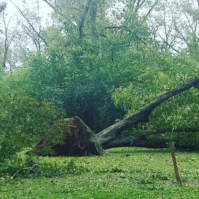 Tree down in Americus
