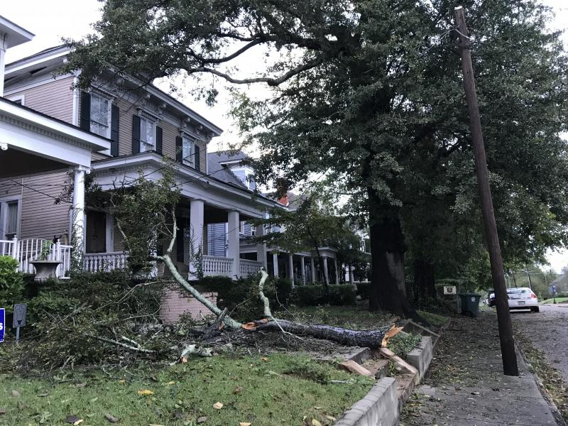 Trees damaged homes in Macon as Hurricane Michael blew through.