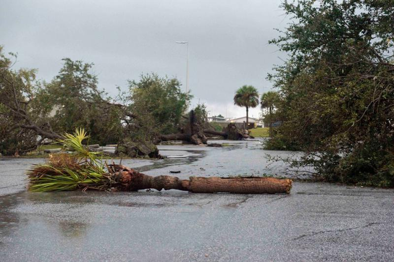 Downed trees on Naval Submarine Base Kings Bay