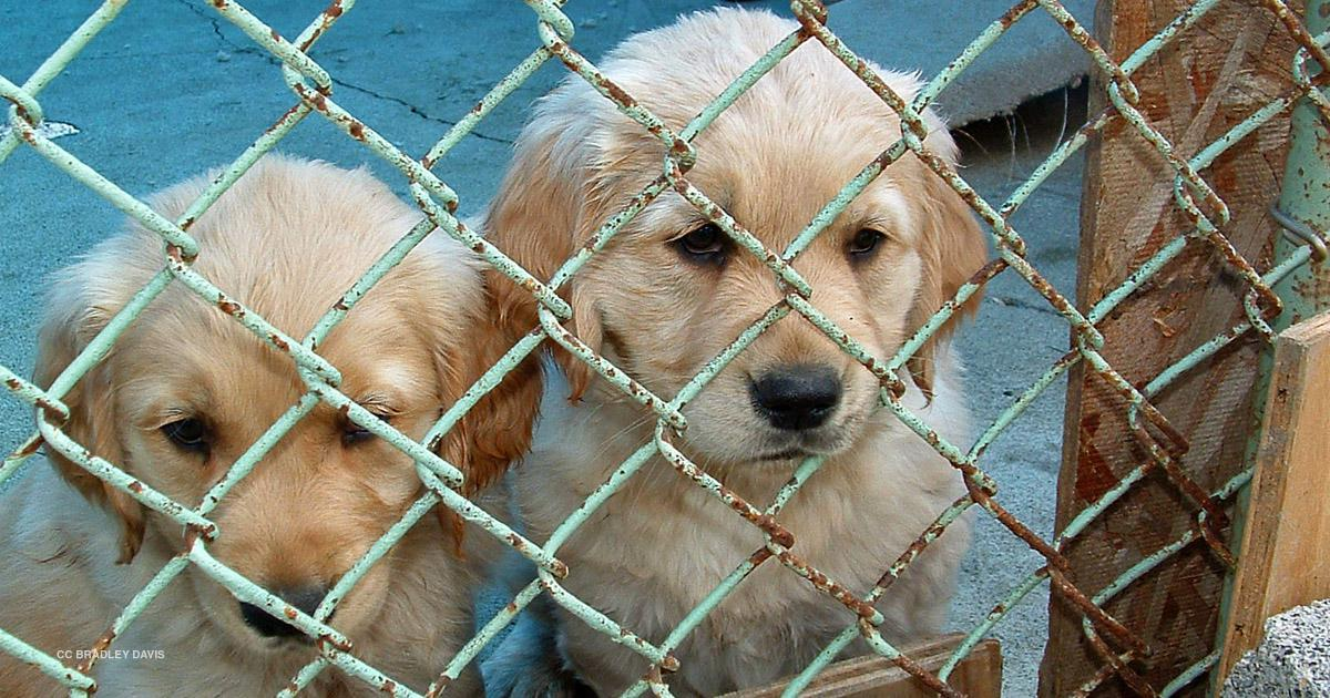 Combating Georgias Puppy Mill Problem Georgia Public Broadcasting