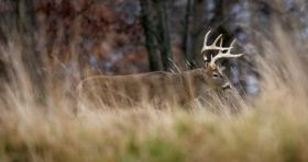 600,000 Michigan hunters are hoping to bag a buck this year.