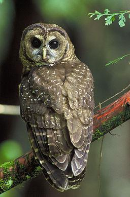 "The Harris Nature Center's ""Owl Prowl"" gives people of all ages the chance to spot an owl in Michigan's woods."