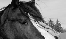 The Michigan Horse Welfare Coalition helps feed horse with their hay bank, and also works to save horses from abuse and neglect.