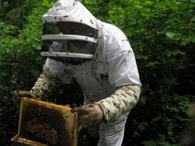 Beekeeping is a growing pursuit in Michigan.