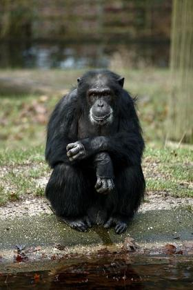The activist group, the Nonhuman Rights Project, is seeking 'bodily liberty' for four chimpanzees and asking that they be moved to a sanctuary.