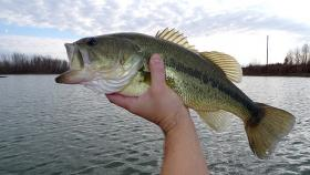 Michigan's environment contributes to a strong supply of healthy bass, says Mary Tate Bremigan.