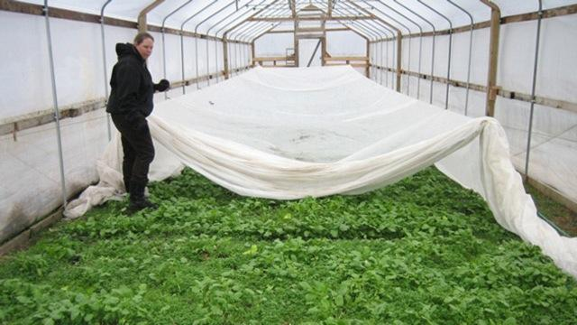 Rebecca Titus in one of the hoop houses on her farm in Leslie. Photo: Gretchen Millich/WKAR