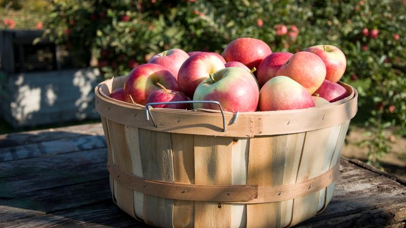 Photo of Michigan apples.