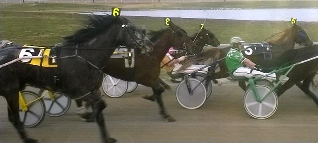 Standard bred horses pull a two-wheeled carriage called a sulky. Hazel Park Raceway will begin racing thoroughbreds on June 29.