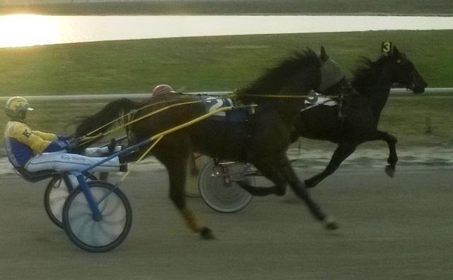 A standard bred horse can pull a driver and sulky at speeds up to 35 m.p.h.