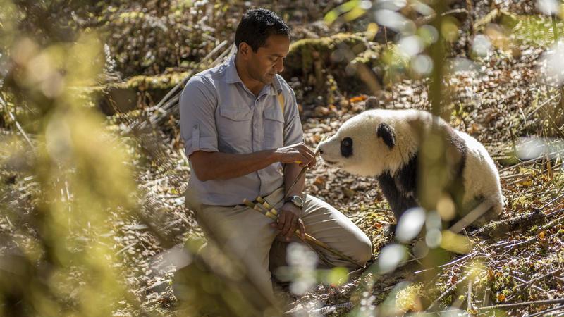 Sanjayan and panda