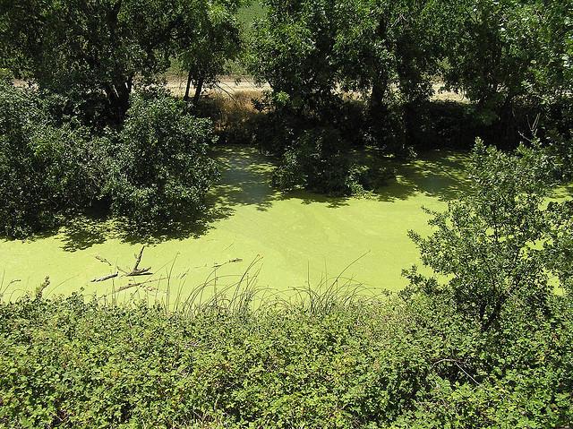 algae photo