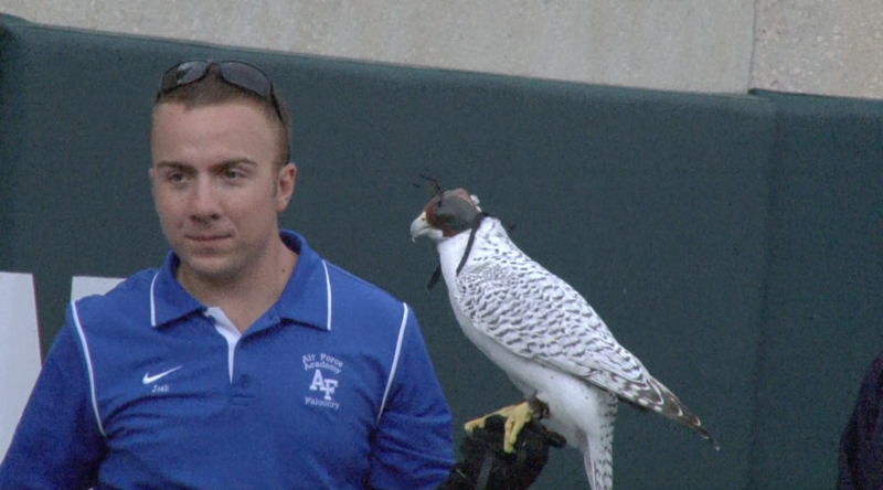 An Air Force Academy falcon handler present at Saturdays matchup against the Spartans.
