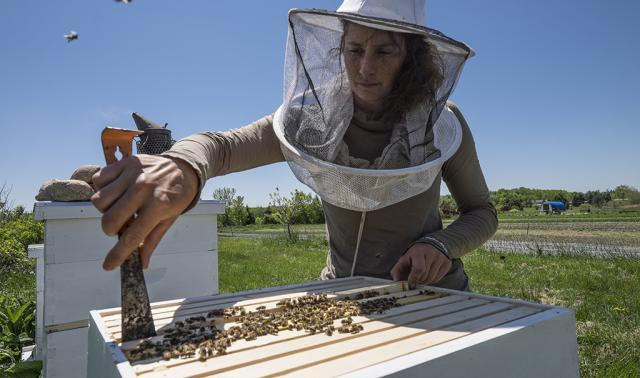 Woman at bee hive