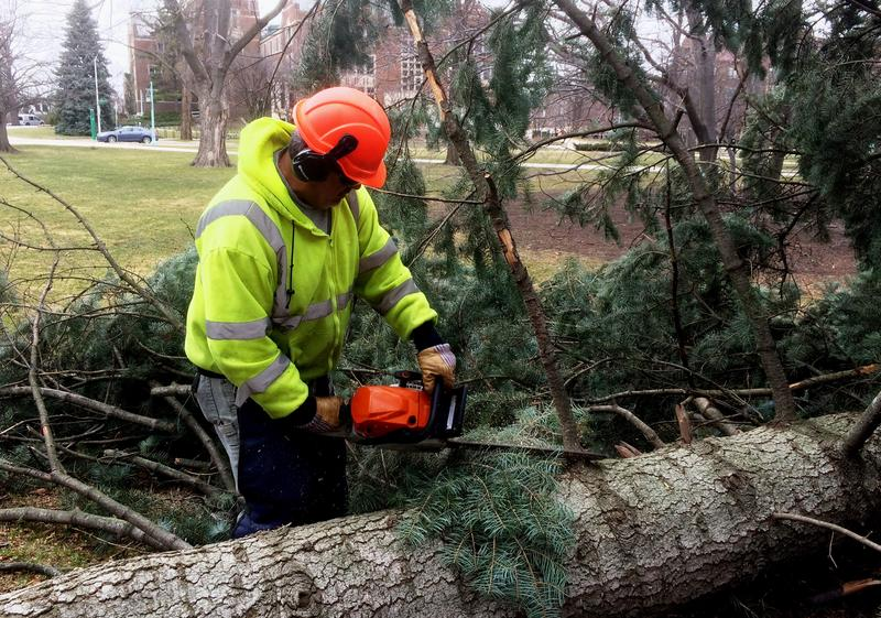 groundskeeper cutting fallen tree with chain saw