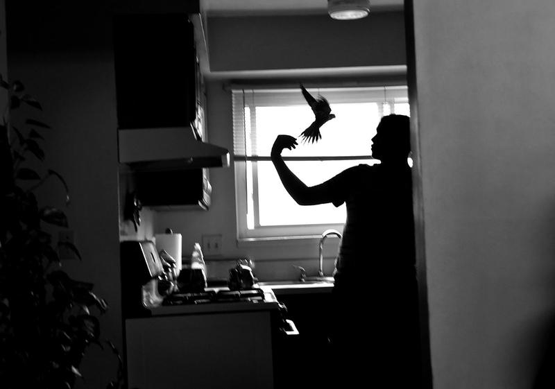 Arshad Jasem, 16, tries to coax his escaped pet bird back into it's cage in the family's home in Lansing recently.