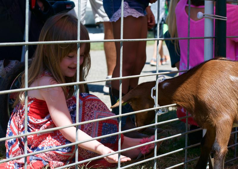 Child feeds a goat at Miller's Petting Zoo.