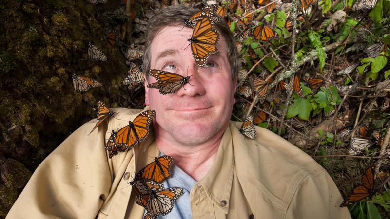 butterflies on the face