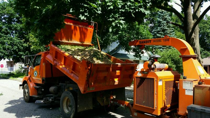 Tree mulching trucks work to cleanup damage in Charlotte, Michigan hours after a severe thunderstorm caused lots of downed trees.