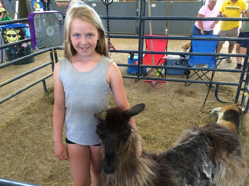 Paige and her llama, Bo at the Clinton County Fair.