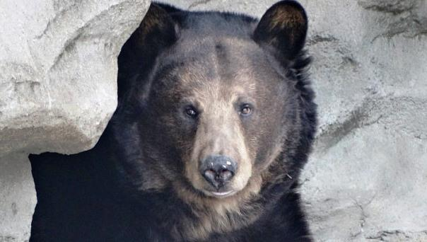 Polly, the brown bear, lived at the Detroit Zoo for nearly 20 years.