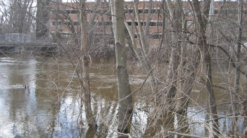 Red Cedar River behind Jenison Field House photo