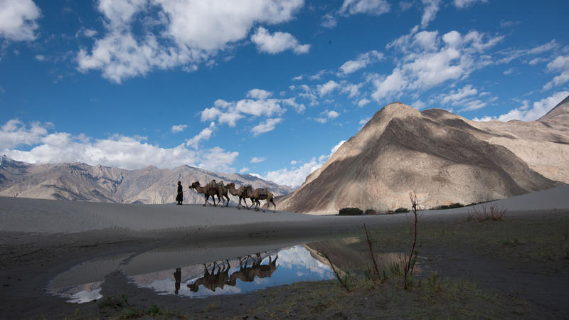 A camel herder leads his camel train over the sand dunces in Nubra Valley, India.