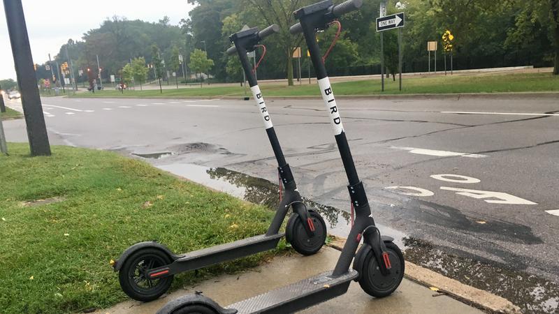 Bird scooters