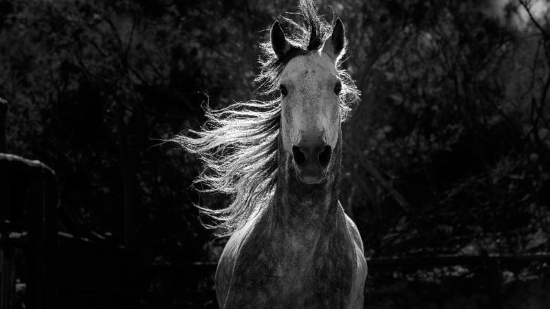 A horse running