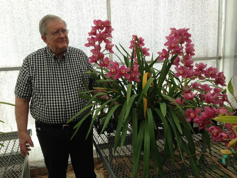 Bill Porter, with his prize winning cymbidium volcano queen orchid.