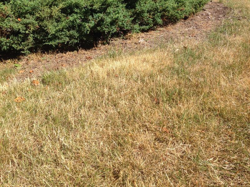 dry grass photo