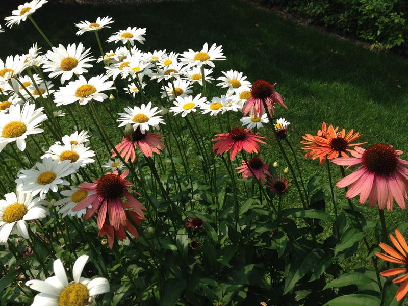Lansing garden photo