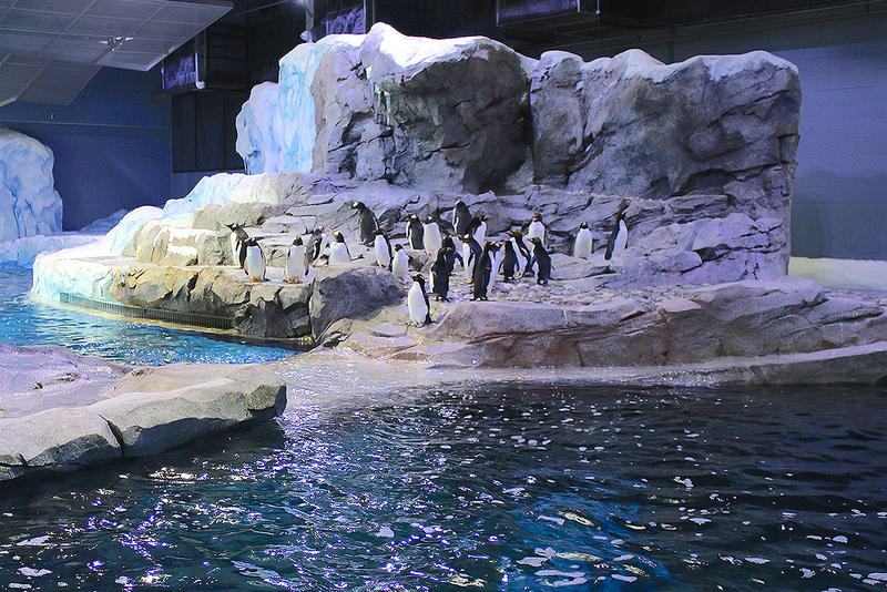 Penguins at home in the Polk Penguin Conservation Center photo
